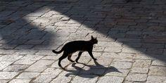 Are u kidding me?    File photo of domestic cat crossing a square. (© Stuart McCall/NORTH LIGHT)