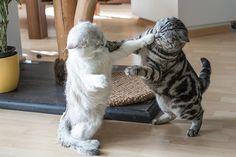 Cat Wrestling :)