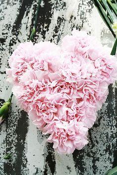 pink carnation heart