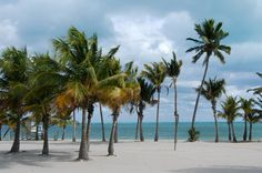 Crandon Park Beach on Key Biscayne was the beach we frequented the most. Sure, it looks beautiful, I remember low tide and lying on the beach chair toasting away! And of course once in a while a ray or lemon shark would bump my leg. Old Florida, Miami Florida, Florida Beaches, Miami Beach, Florida Style, Florida Keys, South Beach, South Florida, Key Biscayne Florida