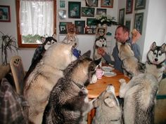 A husky dinner party that's gone on until the wee hours of the morning. | 51 Animal Pictures You Need To See Before You Die
