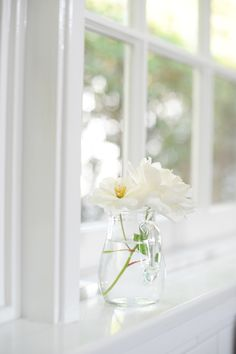 Late afternoon kitchen light with white flowers, by Cupcakes and Cashmere. Flower Backgrounds, Flower Wallpaper, Wallpaper Backgrounds, White Flower Farm, White Flowers, Simple Flowers, Cut Flowers, Flower Aesthetic, White Aesthetic