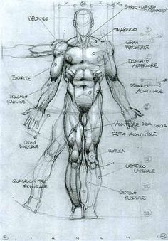 SIMONE BIANCHI - ANATOMICAL DRAWINGS via cgpin.com