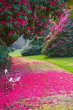 ~Garden of Tregothnan, just south of Truro, Cornwall, pictures by Clive Nichols~