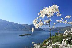 Itinerari primaverili sul #LagoMaggiore: #isoleBorromee e parchi botanici
