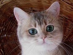 котята няшные