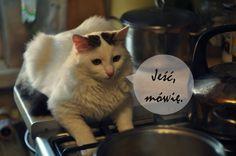 Cats, Blog, Animals, Gatos, Animales, Animaux, Blogging, Animal, Cat