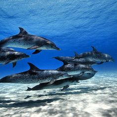 Spotted dolphins - @ocean_magazine- #webstagram