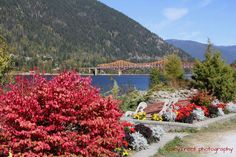 """LLBB, we take off at the airport """"behind"""" this bush and fly over BOB (big orange bridge) up the lake, over the glacier and.land on a grass strip for lunch and a hike. Addition Elle, Western Canada, True North, My Town, Super Natural, Lake Life, Hot Springs, British Columbia, Places Ive Been"""
