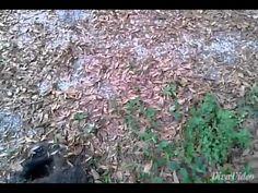 Metal detecting 1800s farmhouse - YouTube