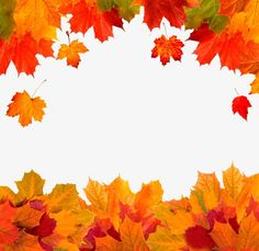 Leaf Border, Page Borders, Verses For Cards, Autumn Theme, Photography Backdrops, Photo Backgrounds, Custom Photo, Autumn Leaves, Clip Art