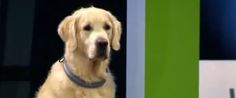WATCH: Golden Retriever Goes On Delightful Rampage During Obedience School--Hmm, kind of like my dogs (or me). I Love Dogs, Puppy Love, Obedience School For Dogs, Dog Fails, Dog Whisperer, Dogs Golden Retriever, Golden Retrievers, Family Dogs, Dog Behavior