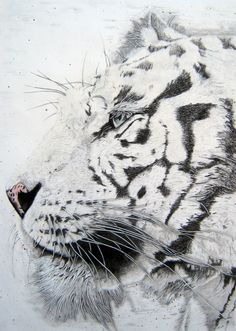 Saatchi Online Artist: Mayhem Mediums; Pencil, Drawing Bengal Tiger
