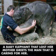 Une très jeune éléphante qui a perdu sa mère remercie l'homme qui s'occupe d'elle désormais...