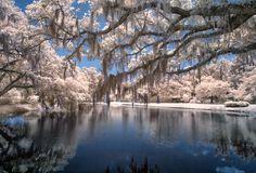Brookgreen Gardens Reflection Pond & Pin Oaks, B+W 090 Filter