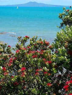 Maraetai looking over to Rangitoto, Auckland, Waitemata Harbour,New Zealand Long White Cloud, New Zealand Landscape, My Family History, Kiwiana, Honeymoons, Beautiful Places In The World, British Isles, Destination Weddings, Auckland