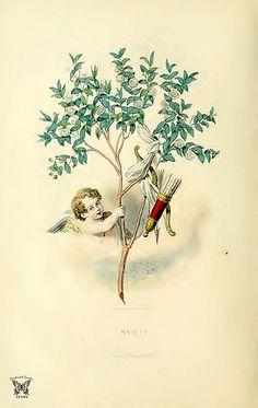 Myrte, J.J.Grandville,  (1867)