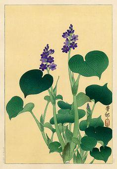 Ohara Koson (1877-1945): Purple Flowering Hosta