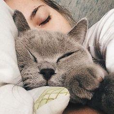 Imagem de cat, girl, and animal