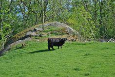 26.05.2012 Lammanuten -Tysvaer