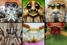 Meet the families: 'A Field Guide to Spiders of Australia' is here