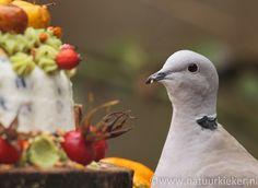 Natuurkieker: Verwen vogels met een vogeltaart