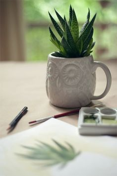 House plants in cute mugs make both things more interesting to look at.