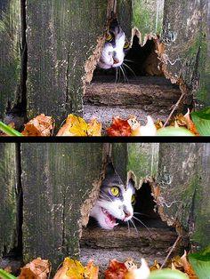peek-a-boo by peachcatlady, via Flickr