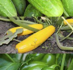 Delicious produce grown from Hess Farms in Chambersburg/Waynesboro, Pennsylvania.