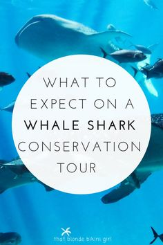 what to expect on a whale shark conservation tour Mexico Tourism, Mexico Travel, Colorful Fish, Tropical Fish, Freshwater Aquarium, Aquarium Fish, Tulum Tours, Shark Conservation, Swimming With Whale Sharks