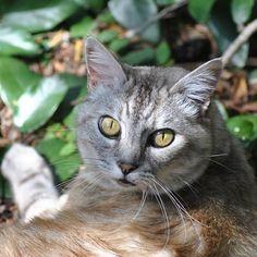 Luna, staring me down... 2/3    #luna #cat #cats #pet #petstagram #nature #kitten #kittens #catstagram #cutie #pets #kitty #catlovers #catsofinstagram #animal #sweet #funpetlove #catlover #ilovemycat #ilovemypet #instapets #petsagram #picpets #instacat #love #music #faces #coffee