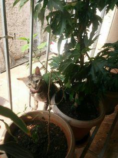 Bubbles, Cats, Animals, Windows, Gatos, Animales, Animaux, Kitty, Cat