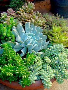 Más tamaños | Mixed succulents | Flickr: ¡Intercambio de fotos!