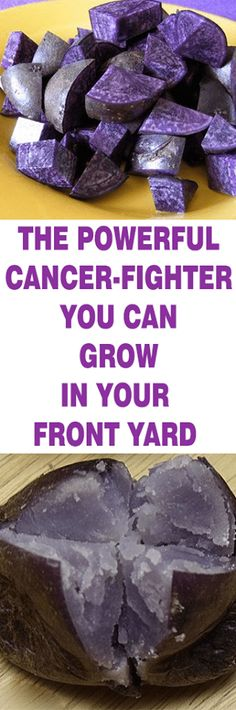 The Powerful Cancer-Fighter you can Grow In Your front yard - healthyusahome Herbal Remedies, Health Remedies, Natural Remedies, Natural Treatments, Cancer Fighting Foods, Cancer Cure, Natural Herbs, Natural Healing, Healthy Tips