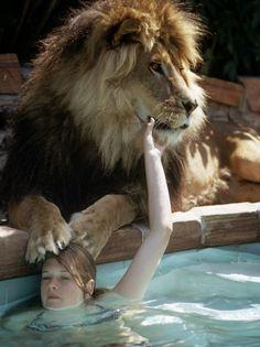 Neil the Lion | Peches mignons