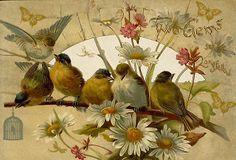 »-♥-> Katia Carvalho <-♥-«: Imagens Free de Pássaros Para Decoupage