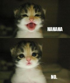 Grumpy Cat's influence on kittens