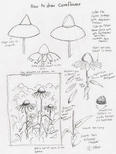 Adron's Art Lesson Plans: How to Draw Cone Flowers Art Lesson For Young Arti. - Garden Style - Adron's Art Lesson Plans: How to Draw Cone Flowers Art Botanical Line Drawing, Floral Drawing, Botanical Drawings, Drawing Lessons, Drawing Techniques, Drawing Ideas, Flower Drawing Tutorials, Art Tutorials, Flower Drawings