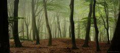 Pre-Autumn Greens by Nelleke.deviantart.com on @DeviantArt
