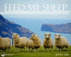 """Ezra Taft Benson Chapter 20: """"Feed My Sheep"""" - these additional insights, teaching tips, and LDS handouts are great"""