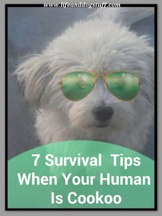 7 Survival Tips When Your Human Is Cookoo #dogs #blog
