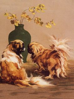 2 Pekes - I suspect this is a copyrighted pic so please don't use in artwork.