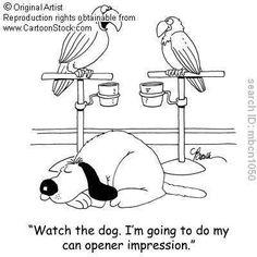 Training Your Pet Parrot Funny Birds, Funny Animals, Funny Cartoons, Funny Comics, Dog Jokes, Dog Funnies, Pet Humor, Diy Bird Toys, Dog Suit