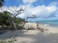 The warm beautiful turquoise colored waters of Mystery Island, Vanuatu. #Australia