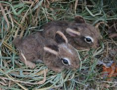 OOAK Needle felted Spring 2 week old Baby Cottontail  by SteviT, $295.00