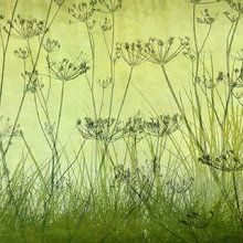 Fotobehang - Wildflowers Lining the Trail - Lime