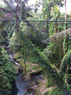 Campuhan River, Ubud, Bali