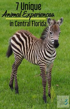 7 Unique Animal Experiences in Florida including Orlando, Central Florida, the Space Coast and South Florida -- from feeding lemurs to petting penguins. Family Vacation Destinations, Florida Vacation, Florida Travel, Travel Usa, Travel Destinations, Vacation Ideas, Family Vacations, Cruise Vacation, Seaworld Orlando