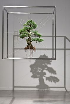 Art installation: Frozen Pine by Makoto Azuma, Japan- the tree hovers w/ exposed roots, defying gravity & logic. Perfect lighting casts the tree's silhouette onto the floor