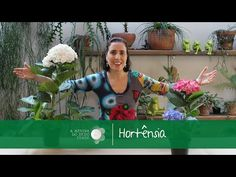 Vídeo da Semana: O Segredo da Cor da Hortênsia | A Menina do Dedo Verde hidrangeas